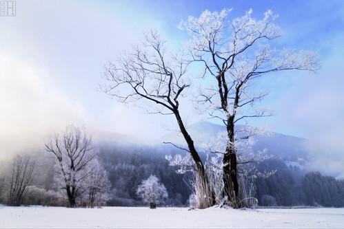 winter mist snow tree landscape austria frost gettyimages hoar vorarlberg frastanz thesnowsofkilimanjaro frastanzerried