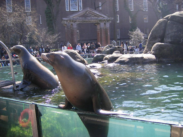 sea lions at central park zoo flickr photo sharing. Black Bedroom Furniture Sets. Home Design Ideas