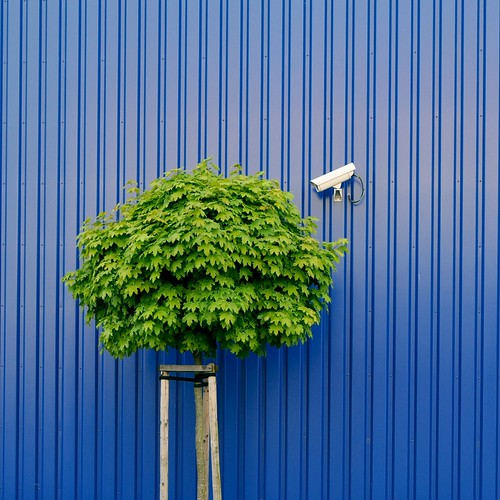 Tree watching by IKEA security