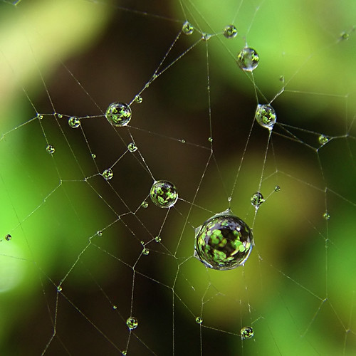 How to Catch Light in a Web