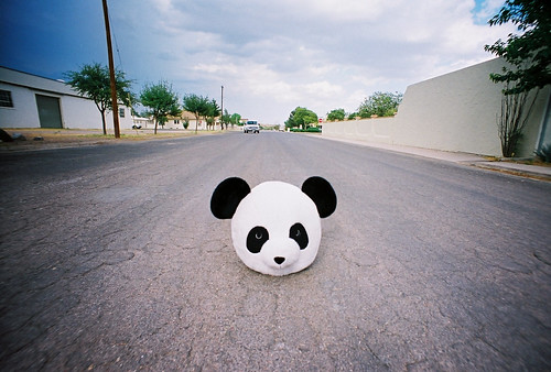 panda head in marfa