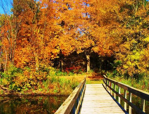 autumn fall dock foliage