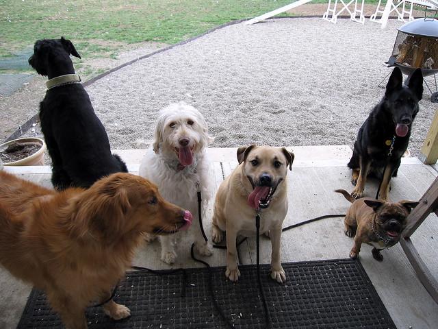 Dog Boarding Training In Mesa