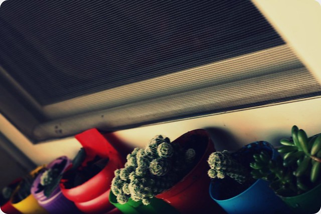 my mom`s little garden of happiness ;)