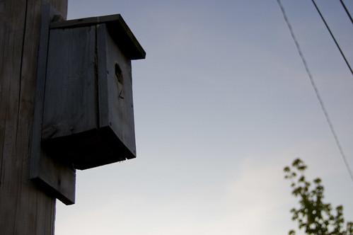 sunset birdhouse rolla d40