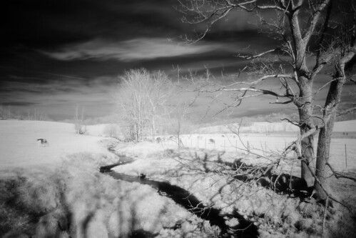 trees rural creek landscape cattle scenic hills infrared pastoral