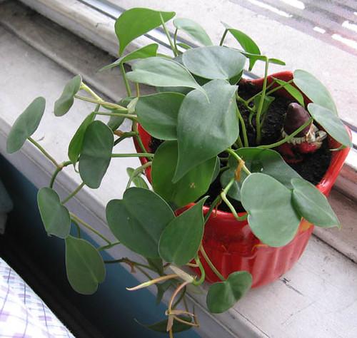 House plant identification flickr photo sharing - House plant identification guide by picture ...