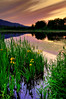 Buttertubs Marsh - Nanaimo by Len Langevin