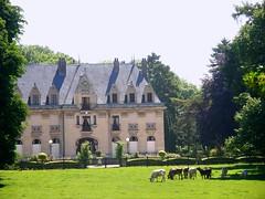 pâture aristocratique / aristocratic meadow