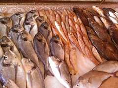 fish, fish, seafood, food, shishamo,