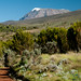 Getting Closer to Mt. Kilimanjaro Peak - Tanzania