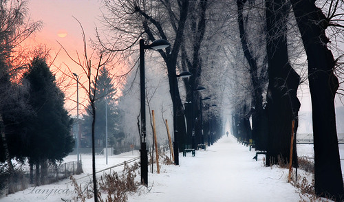 park morning blue trees winter red sun mist snow cold beautiful misty sunrise walking landscape person photography town vanishingpoint alley fotograf photographer path walk serbia freezing quay explore getty benches wonderland idyllic gettyimages distant treealley srbija lampposts floodbarrier фотограф nisava pirot kej srpski fotografija српски фотографија pirotskikej pirotskicilim нишава kejnanisavi кејнанишави pirotserbia tanjicaperovic pirotkej pirotski pirotsrbija тањицаперовић tanjicaperovicphotography availableforlicensingongettyimages fotografijepirota barrieragainstflooding svetozarmisirlic floodingprotection