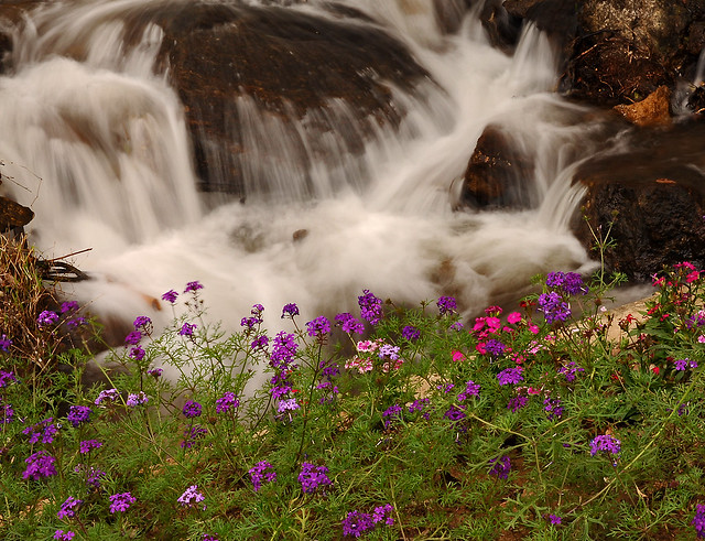 ~ Flowers At The Waterfall ~
