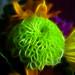 Des Fleurs sur le Feu (Flowers on Fire) by Gilbert Rondilla