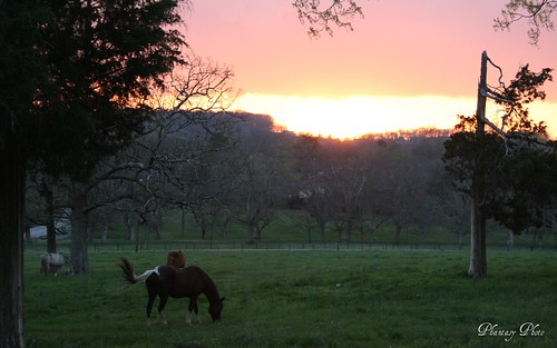 trees sunset horses horse grass view dreamhome