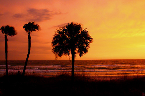 Palm trees in front of a tropical seaside sunset.