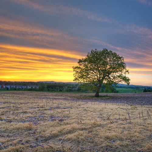 sunset tree green field yellow clouds canon virginia spring hdr blacksburg 1740f4l foxridge 3ex organce vertorama