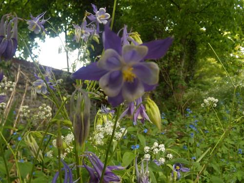 Kipling gardens, Rottingdean