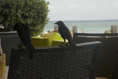 Birds at Cunucu Terrace