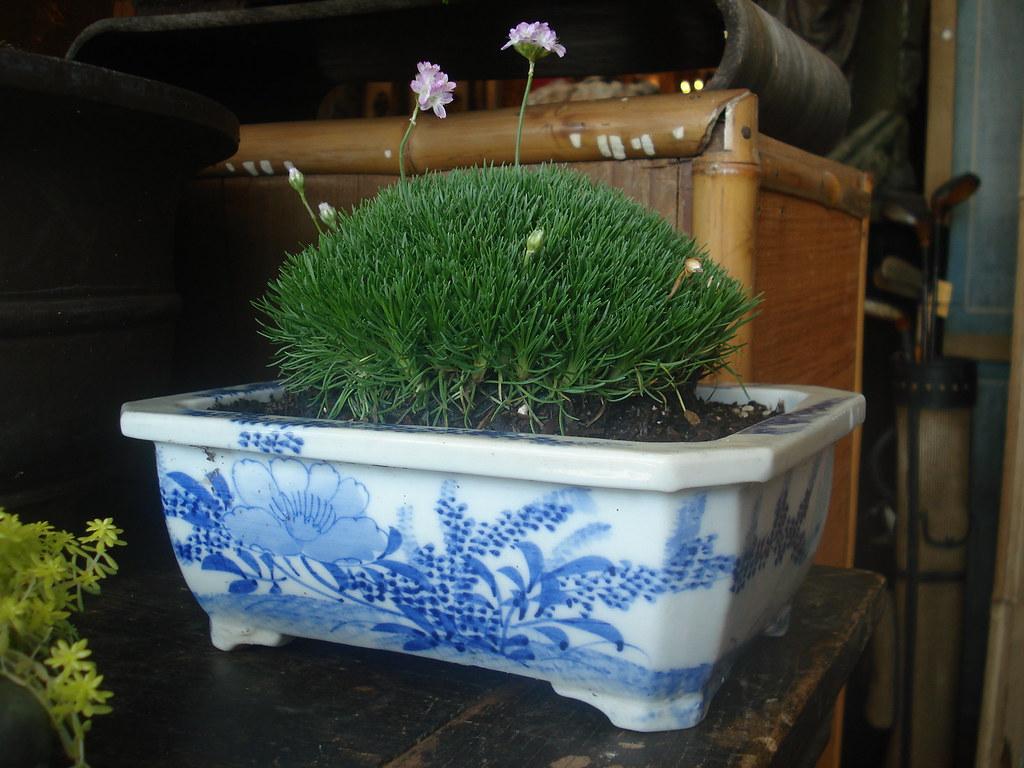 Bonsai Amp Indoor Plants