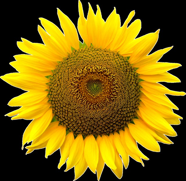 Sunflower heart inside, Png file, Attention only the maximum original size is in png format