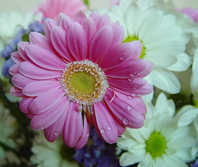 Margaritas De Colores | Flickr - Photo Sharing!