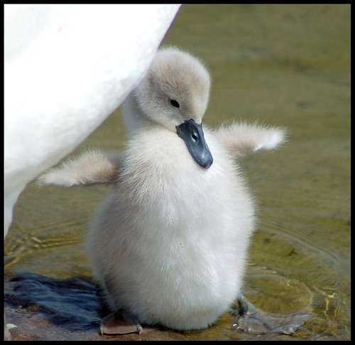 Look mummy, my wings are huge!!