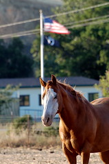 Horse with Ranger station and flag in the background
