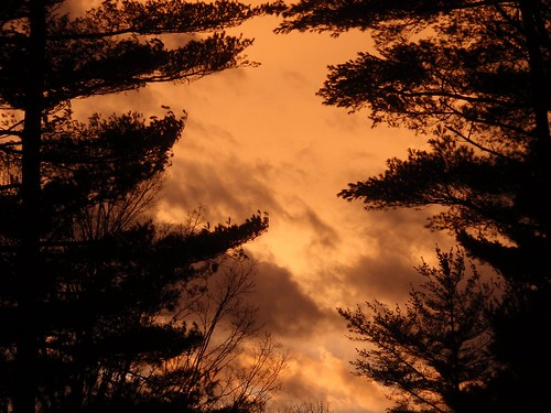 trees winter sunset sky orange storm black tree nature clouds wow fire backyard uc backyardsunset blackness awesomeshot anawesomeshot