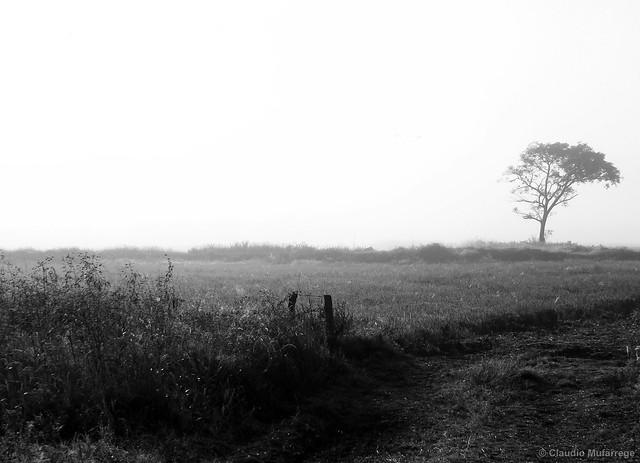 Lonely in the fog / Solitario en la niebla