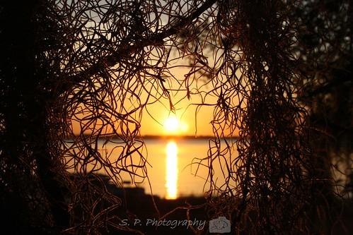 sunset 2009 lakeminneola project365 33009 89365