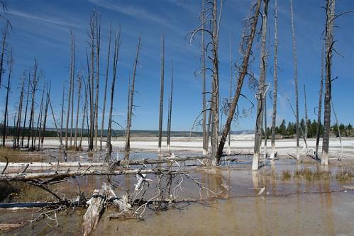 Parque Nacional Yellowstone: Norris Geyser Basin (Fountain Paint Pots) parque nacional yellowstone - 3420342075 ffe1464454 - Parque Nacional Yellowstone, cómo visitarlo en dos días