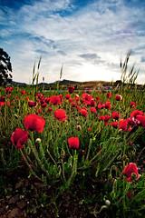 Spain - Cabo de Gata Natural Park: Begginings of Spring