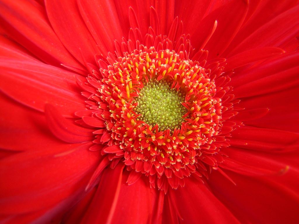 Uno planta su propio jardín y decora su propia alma