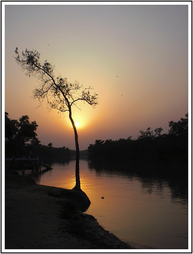 life light sunset shadow red sea sky sun reflection tree water beauty silhouette set forest sunrise river twilight remember dusk earth bank jungle shore moment bangladesh bangla sundarbans chhayapath curtainoverday