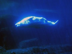 humpback whale(0.0), beluga whale(0.0), animal(1.0), marine mammal(1.0), whale(1.0), marine biology(1.0), underwater(1.0),