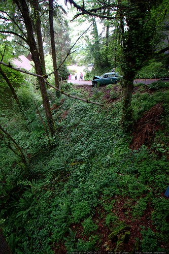 a car crashed down our hillside this morning    MG 4974
