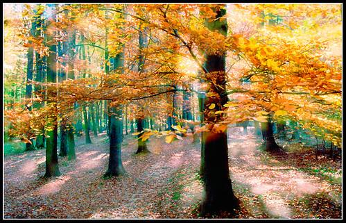 Herbstwald by helmut_albin_ebner