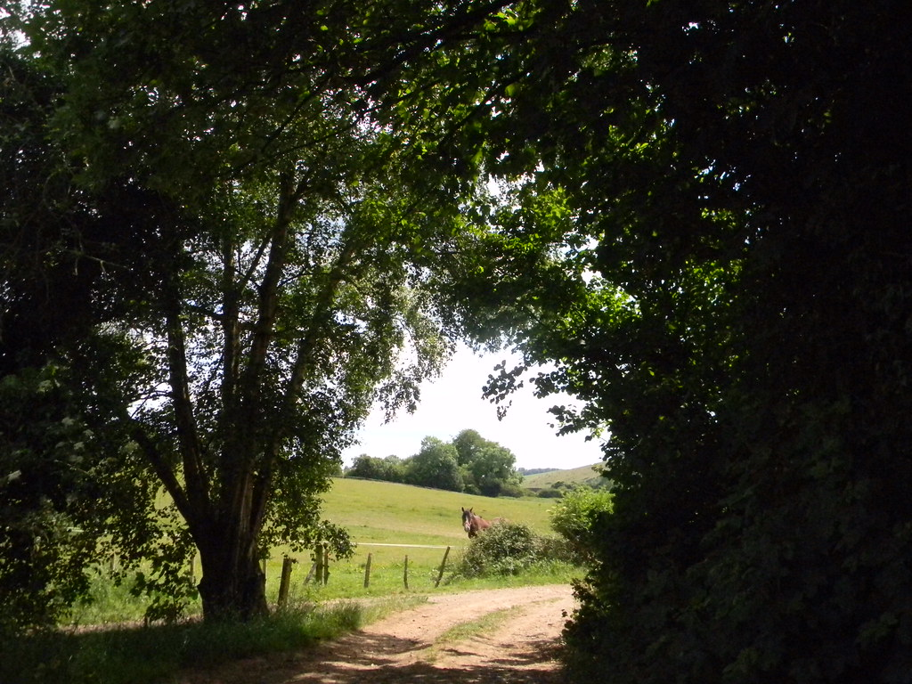 Horse Petersfield to Rowlands Castle