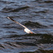 Edg_Res_Birds-6.jpg