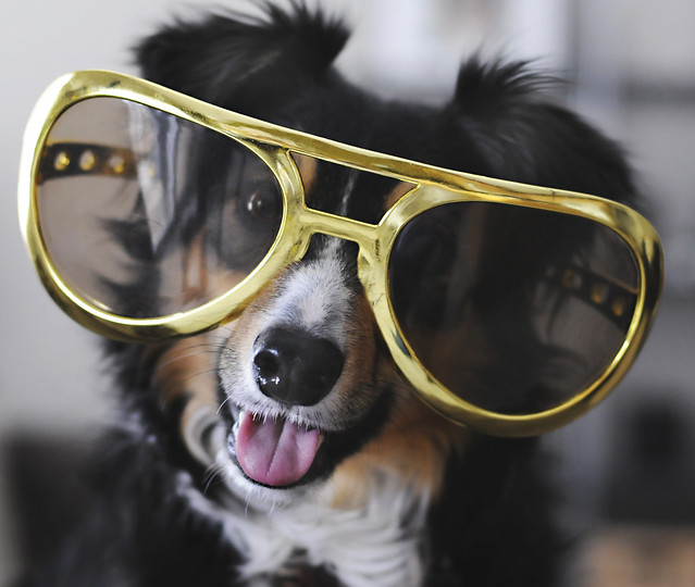 Cool dogs with sunglasses - photo#21