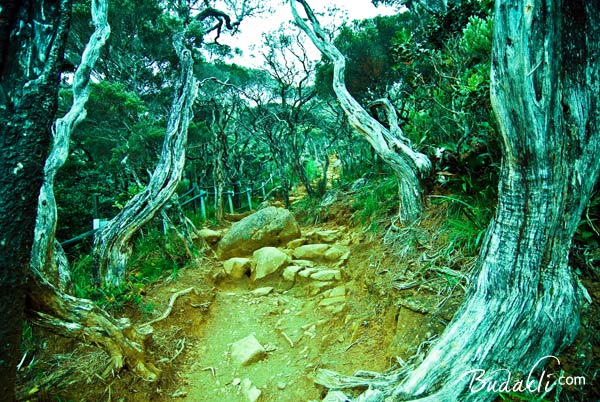 キナバル公園内のジャングルの風景