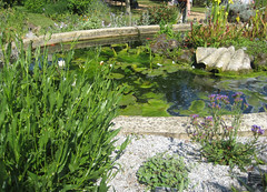 flower, garden, fish pond, landscaping, pond, aquatic plant,