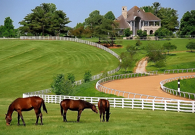 Amish Restaurant North Carolina