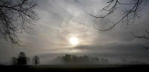 uk mist tree wales sunrise canon landscape eos dawn britain cymru cardiff caerdydd 5d wfc gwent 24105 canoneos5d ef24105f4l wentloog welshflickrcymru stevegarrington