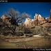 Zion National Park (9)