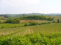 flower(0.0), paddy field(0.0), plateau(0.0), pasture(0.0), grassland(0.0), prairie(1.0), agriculture(1.0), shrub(1.0), farm(1.0), field(1.0), soil(1.0), plain(1.0), hill(1.0), crop(1.0), meadow(1.0), rural area(1.0), vineyard(1.0), plantation(1.0),