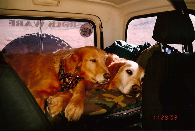 Gunner and Kachina Road trip