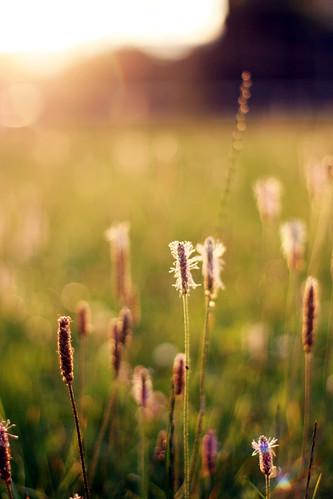 nature sundown bokeh erfurt sunday sunflare rieth