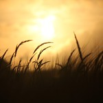 wheatsunset2-flickr